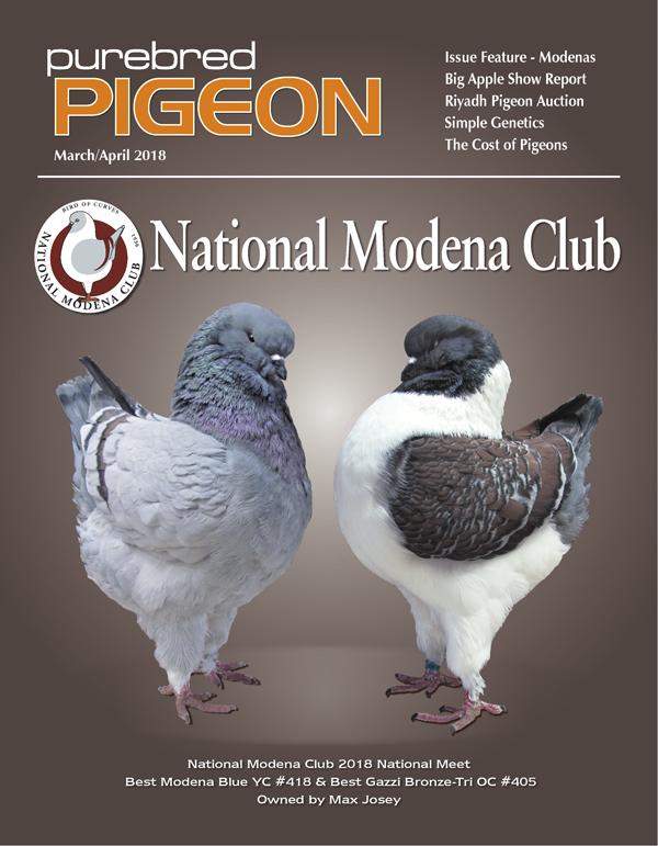 Pigeon Magazine   Show Pigeons   Performing Pigeons   Racing