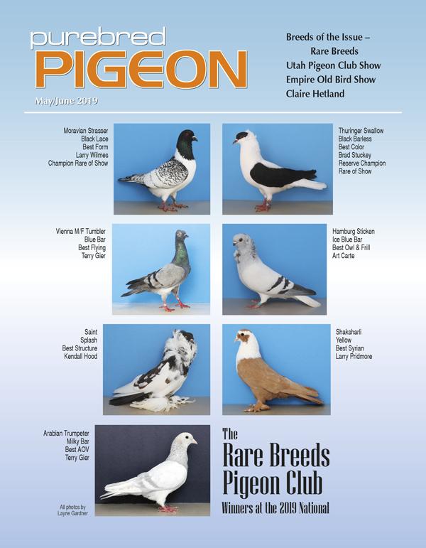 Pigeon Magazine | Show Pigeons | Performing Pigeons | Racing