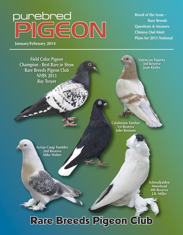 Pigeon Magazine | Show Pigeons | Performing Pigeons | Racing Pigeons